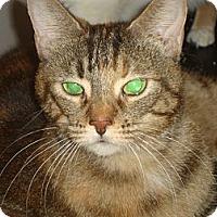 Adopt A Pet :: Olive Jane - Elmhurst, IL