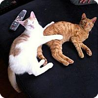 Adopt A Pet :: William & Harry - Audubon, NJ