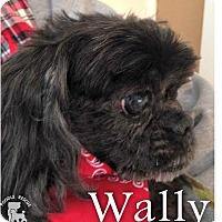 Adopt A Pet :: Wally - Essex Junction, VT