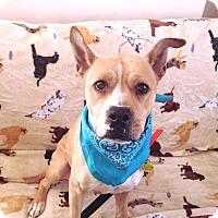 Adopt A Pet :: Jewel - Elderton, PA