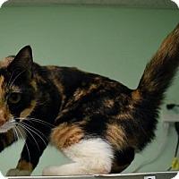 Adopt A Pet :: Betty - Canastota, NY