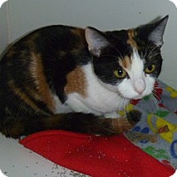 Adopt A Pet :: Sallie - Hamburg, NY