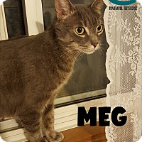 Adopt A Pet :: Meghan but you can call me Meg - Huntsville, ON