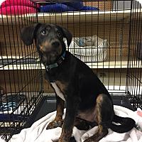 Adopt A Pet :: Reece - Houston, TX