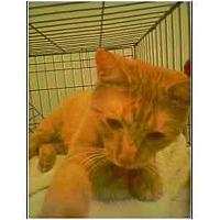 Adopt A Pet :: Sunshine - Owasso, OK