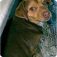 Adopt A Pet :: Wilhelm - dewey, AZ