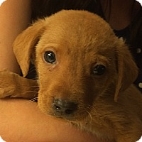 Adopt A Pet :: Leon*ADOPTED!* - Chicago, IL