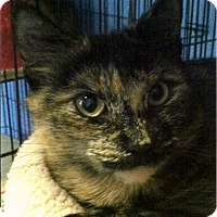 Adopt A Pet :: Lily - Medway, MA