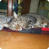 Adopt A Pet :: Belmont - Medina, OH