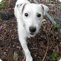 Adopt A Pet :: Jasper - Miami, FL