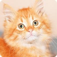 Adopt A Pet :: Cody - Xenia, OH