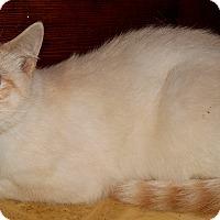 Adopt A Pet :: Jupiter - Chattanooga, TN