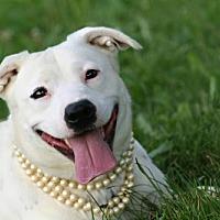 Adopt A Pet :: Mila - Marion, KY