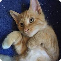 Adopt A Pet :: Cilan - Scottsdale, AZ