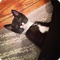 Adopt A Pet :: Mal - Brooklyn, NY