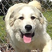 Adopt A Pet :: Clifford - Allentown, PA