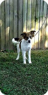 Collie Mix Puppy for adoption in Manchester, Connecticut - Josie-pending adoption