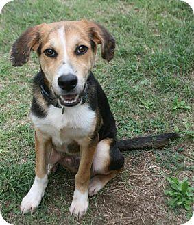 Beagle Mix Dog for adoption in Lufkin, Texas - Speck