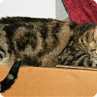 Adopt A Pet :: Sharon - Santa Rosa, CA