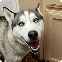 Adopt A Pet :: Shadow - Ogden, UT