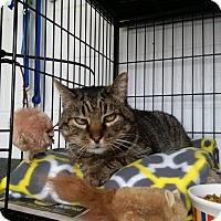 Adopt A Pet :: Carlos - North Kingstown, RI