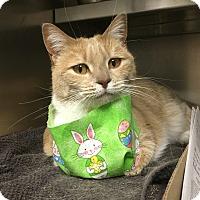 Adopt A Pet :: Momo - Manchester, NH