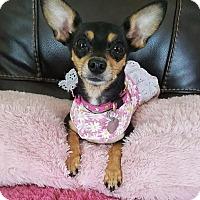 Adopt A Pet :: Twila - San Diego, CA