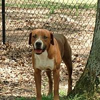 Adopt A Pet :: Sam - Huntsville, AL