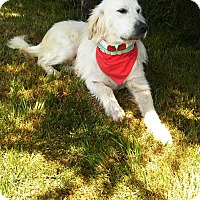 Adopt A Pet :: Nicholas - Washington, DC