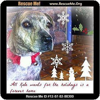 Plott Hound/American Staffordshire Terrier Mix Dog for adoption in Scottsdale, Arizona - Kate IM SO PRETTY