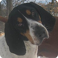 Adopt A Pet :: Lindy - Jacksonville, FL