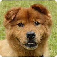 Adopt A Pet :: Redman - Mocksville, NC