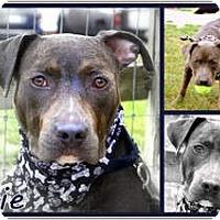 Adopt A Pet :: Eerie - Toledo, OH