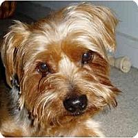 Adopt A Pet :: Baxter - Jacksonville, FL