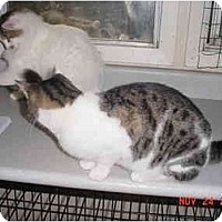 Adopt A Pet :: Molly - Pendleton, OR