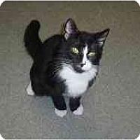 Adopt A Pet :: Mitch - Hamburg, NY