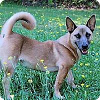 Adopt A Pet :: *Taylor - Winder, GA