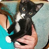 Adopt A Pet :: Osha - Reston, VA