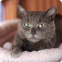 Adopt A Pet :: Macy Gray - Chicago, IL