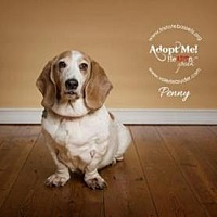 Basset Hound Dog for adoption in Pennsville, New Jersey - PENNY