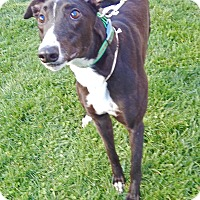 Adopt A Pet :: Cannon Boom - Florence, KY