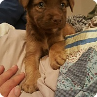 Adopt A Pet :: Chance - Stamford, CT
