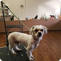 Adopt A Pet :: Shiloh - Garwood, NJ