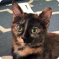 Adopt A Pet :: LORALEI - Burlington, NC