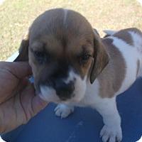 Adopt A Pet :: Baron - Bonifay, FL