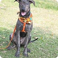 Adopt A Pet :: Sean - Castro Valley, CA