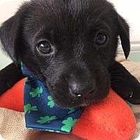 Adopt A Pet :: Bailey - Huntsville, TN