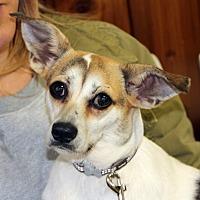 Adopt A Pet :: Yuki - Harrison, NY