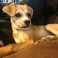 Adopt A Pet :: Mila - Visalia, CA