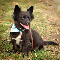 Adopt A Pet :: Baby Queen - Barnesville, GA